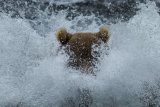 Submerged fishing bear