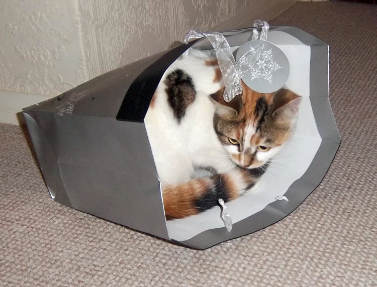 PUSSY IN A BAG