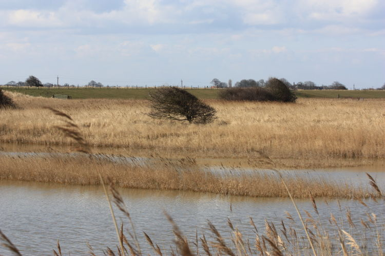 Chapel Marshes