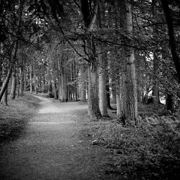 Pathway, Study #1