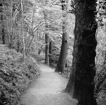 Pathway, Study #2