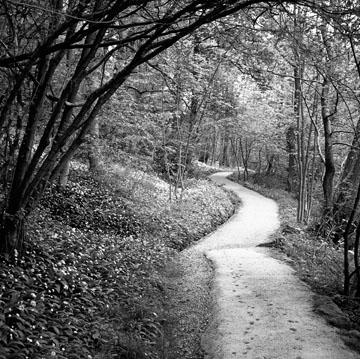 Pathway, Study #3