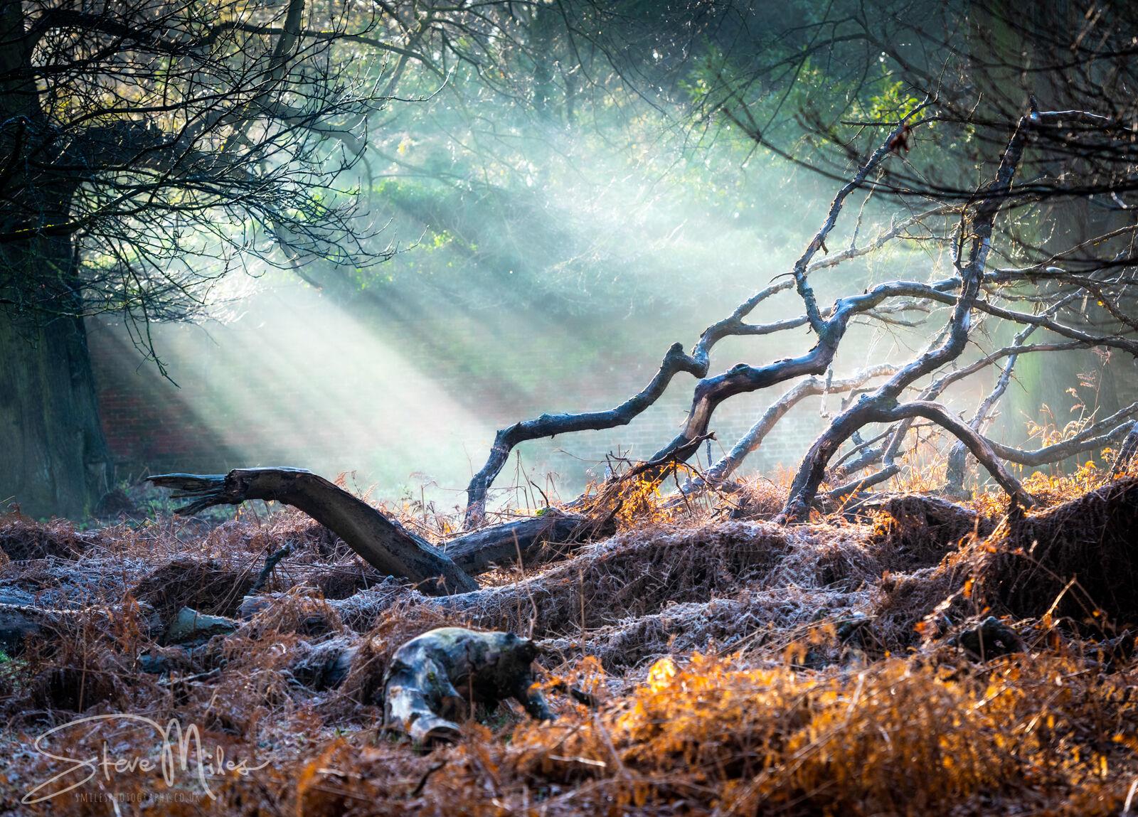 Morning sun burns frost away