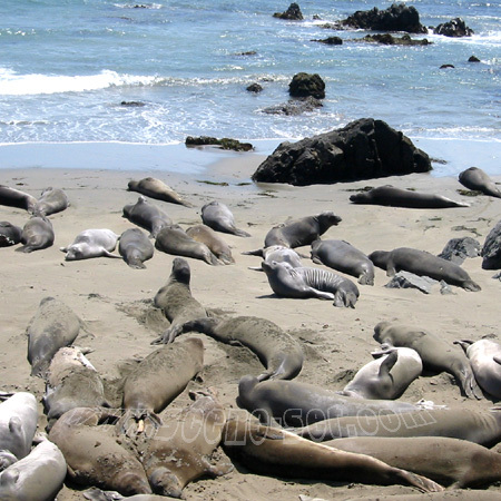 seal's big sur <br> california