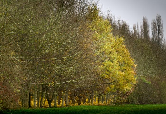Harrold Country Park