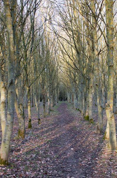 Grafham Wood