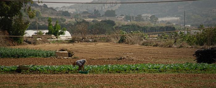 Tending the Crop