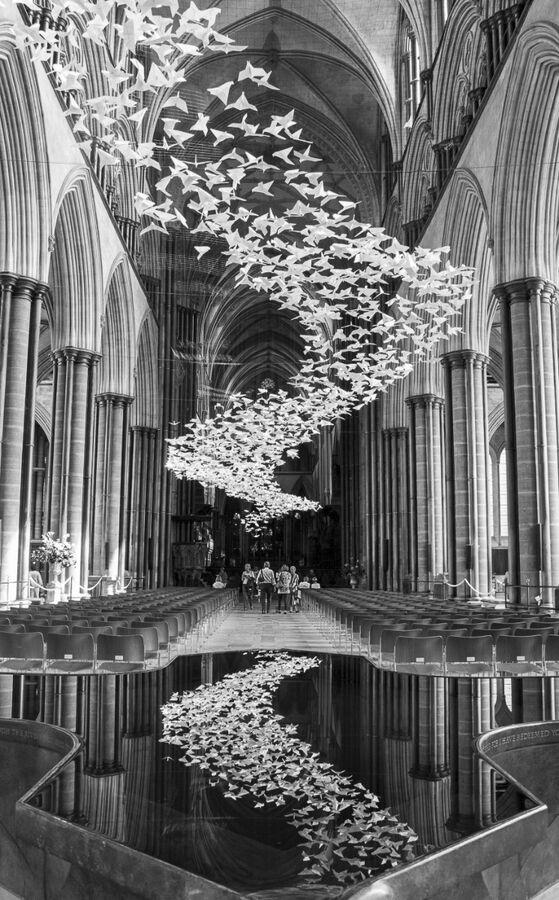 Salisbury Doves