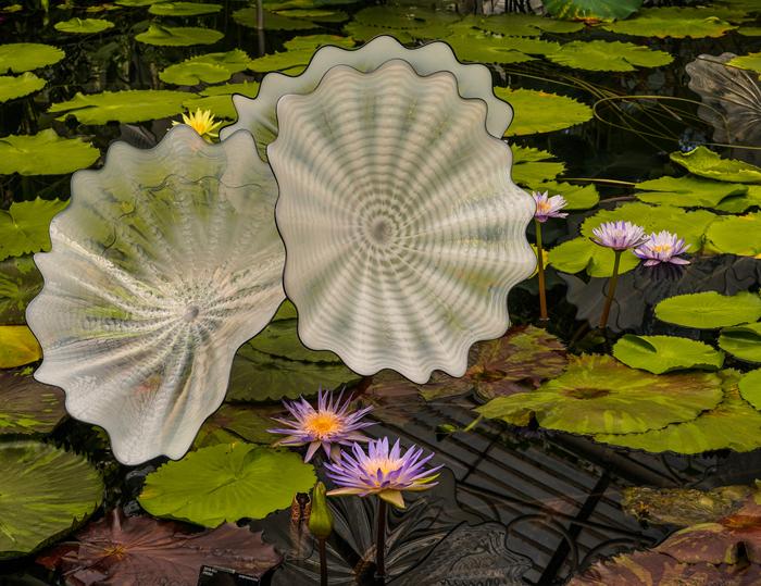 Lily Pond Kew