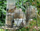 Squirrel-proof Feeder
