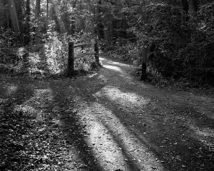 Oaks Wood Cambourne