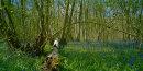 Spring in Waresley Wood