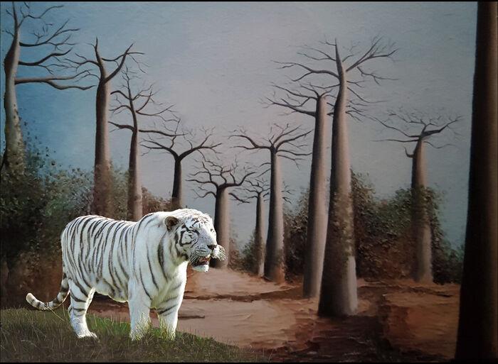 Tiger In Adansonia Digitata Forest