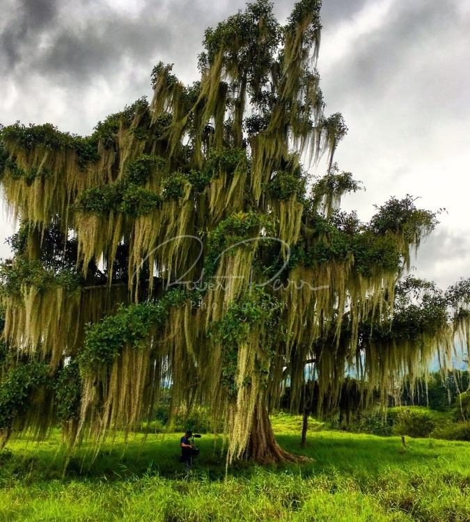 spectacular tree