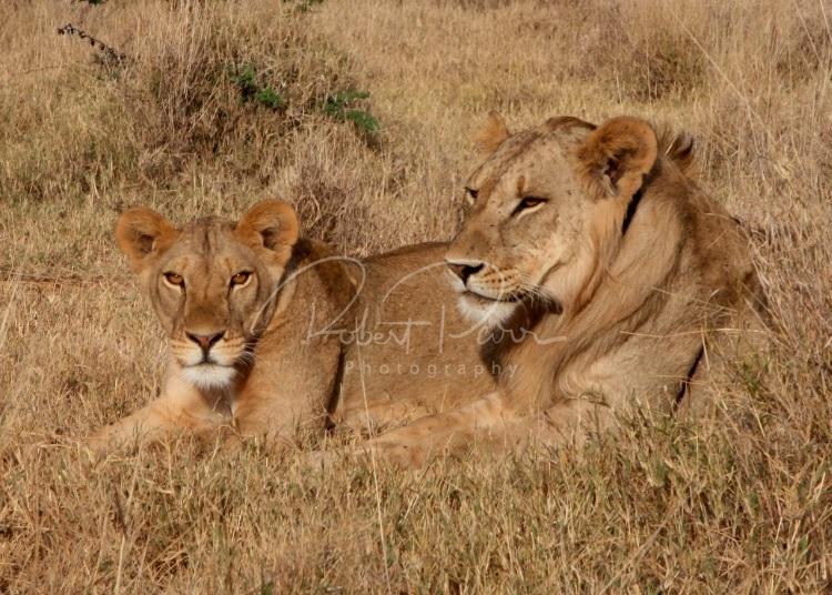 feline partners
