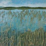 Reeds at Lake of Menteith