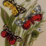 Three tiger moths