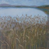 Winter, reeds at Lake of Menteith