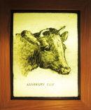 Alderney Cow