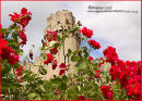 """CASTLE IN BLOOM"""