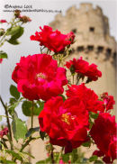"""FLOWERS AND CASTLE"""