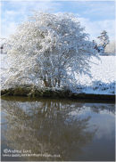 """WINTER TREE IN REFLECTION"""