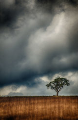 Stormy Hillside Tree