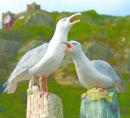 Ceramic seagulls by Jackie Summerfield