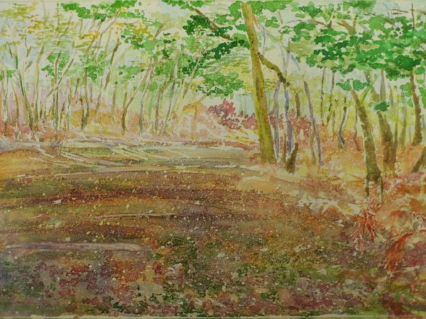 Textures - woodland by Elizabeth
