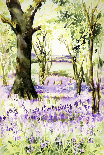 Bluebells at Godshill