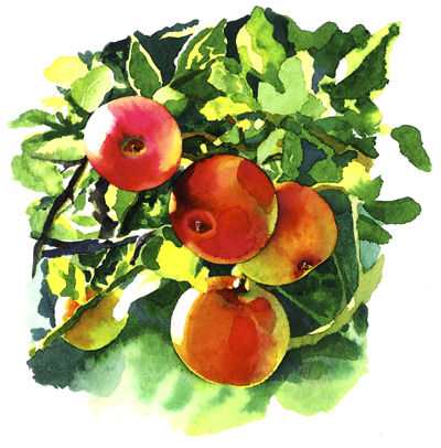 Norfolk Apples by Liz Hankins