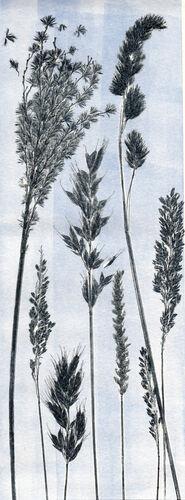 Blue Grass 2