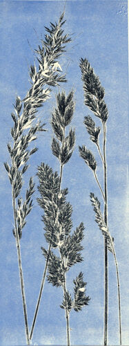 Blue Grass 1