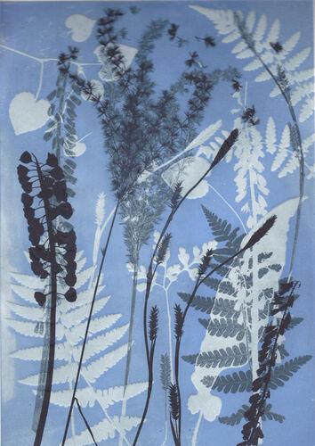 Hidden Ferns