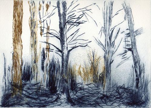 Westdean woods