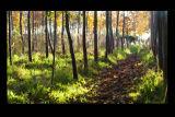 Woodland floor in Autumn