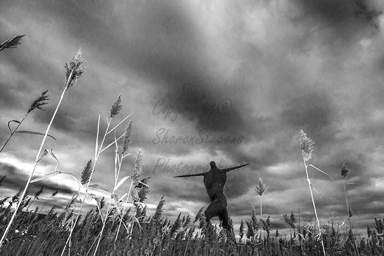 The famous Willowman of Somerset