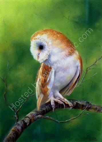 Ever Alert, Barn Owl