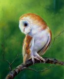 Ever Alert, Barn Owl