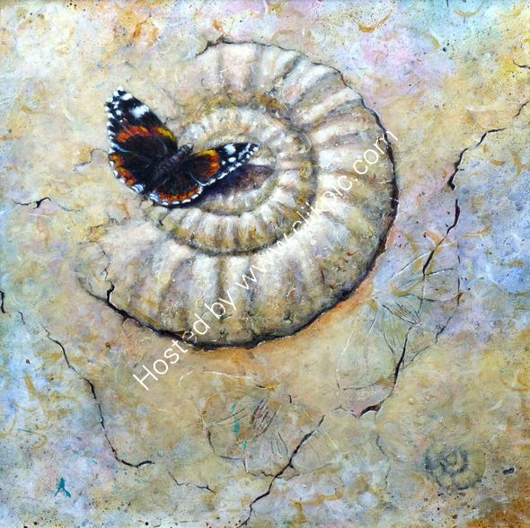 Fossil Ammonite and Red Admiral Butterfly.