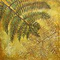Living Fossil, Tree Fern