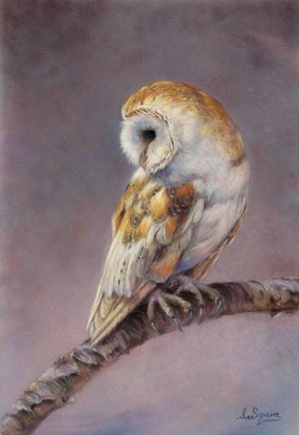 Barn Owl Whisper