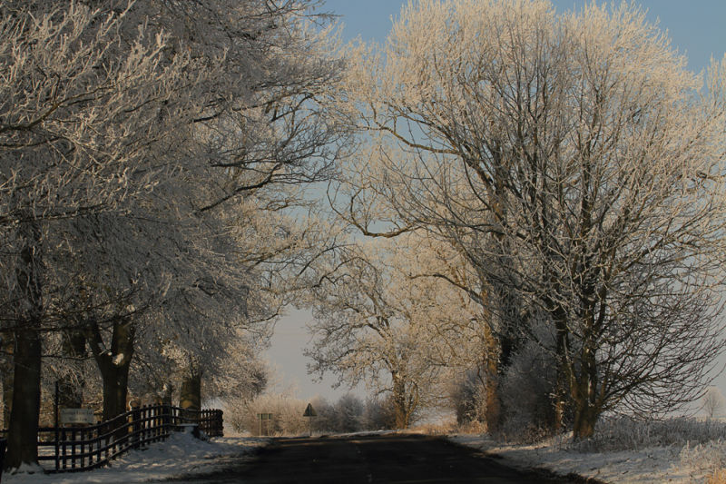 Cold Avenue of Trees