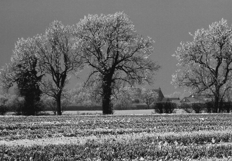 Lincolnshire Trees