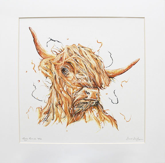 Hairy Hamish Limited Edition Mounted Prints and Cards