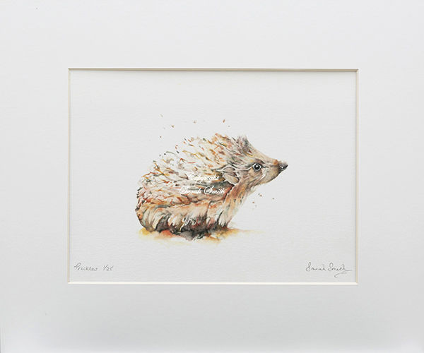 Prickles Limited Edition Prints and Cards
