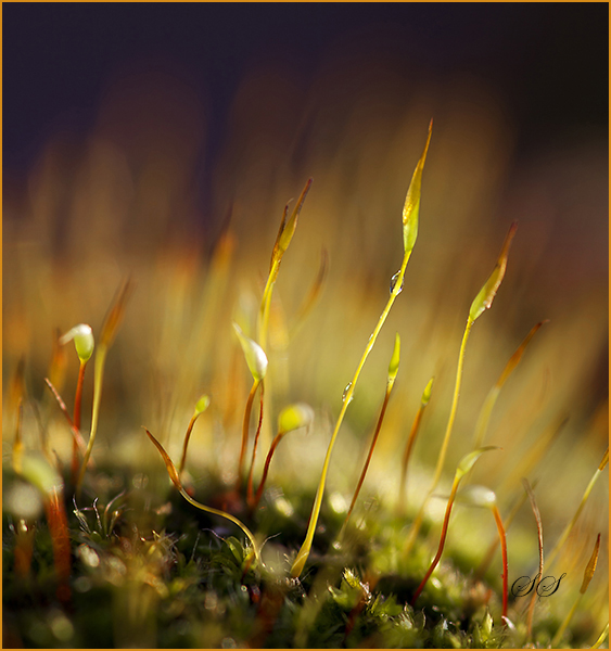 Winter Sunshine on Moss
