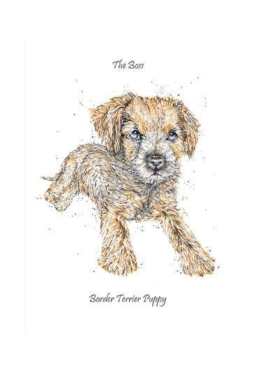 The Boss [ Border Terrier Puppy ]