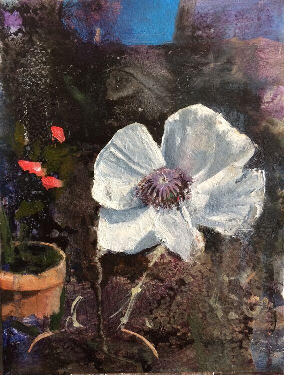 Bloom V