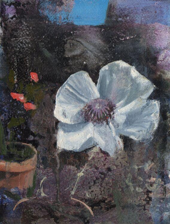 <em> Bloom</em> 6x8ins £90